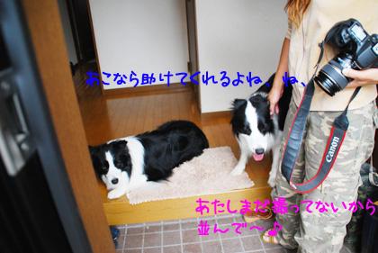 B_DSC_53731.JPG